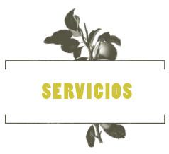 LHV-banner-servicios